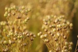 Семя льна для тех, кто любит свою кожу