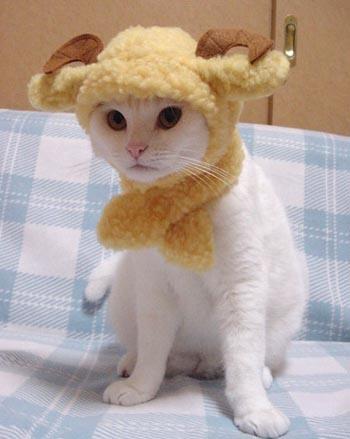 кошки против депрессии