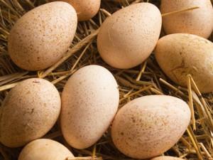 Лечит куриное яйцо