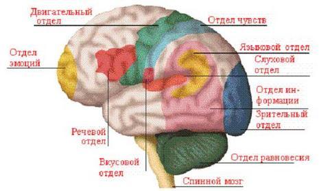 Инсульт и генетика
