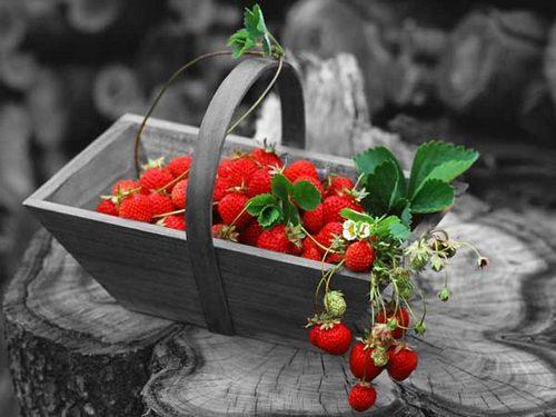 Клубника - райская ягода