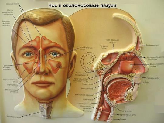 Народная медицина при гайморите