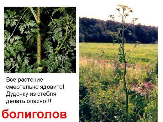 Ядовитые травы