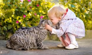 Болезни которые приходят с кошкой