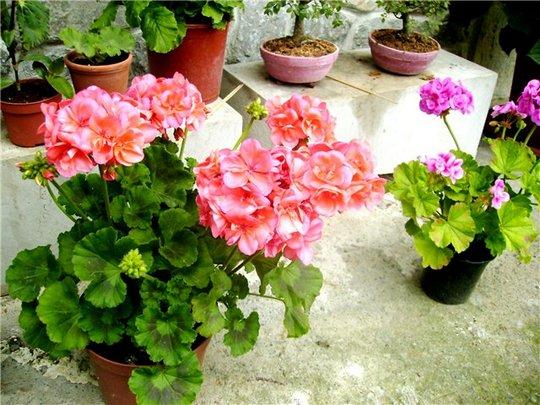Биоэнергетика растения