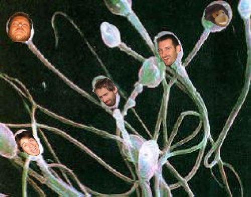Протеин, помогающий сперматозоиду