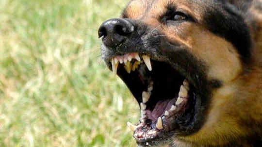 Нападение собаки - азбука выживания