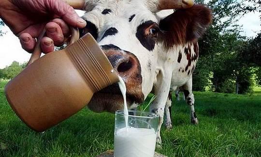 Молоко и его свойства