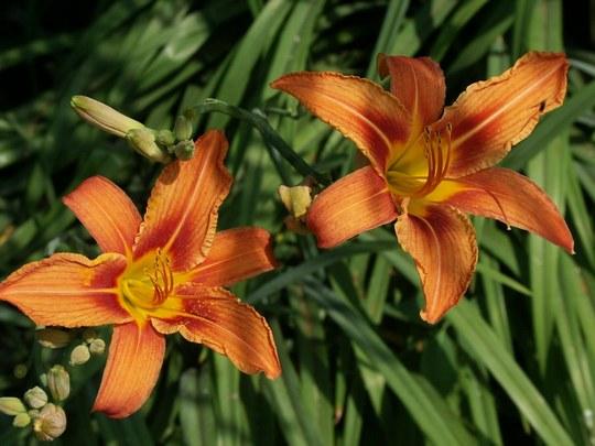 Лекарство из цветов