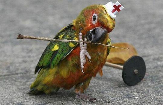 Лекарственные животные