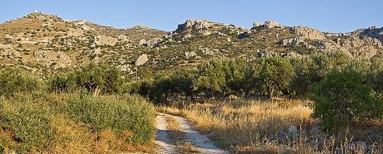 Оливковое масло - жидкое золото Греции