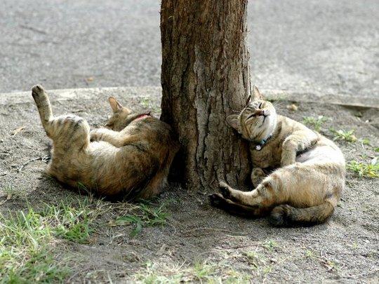 Поведение кошек, как понимать