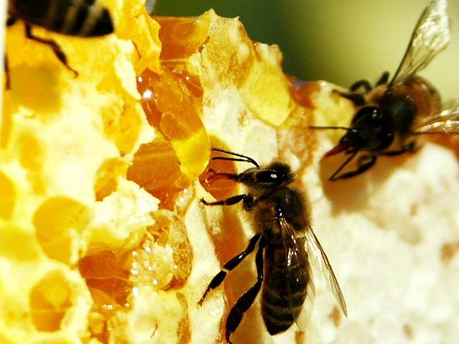 Как правильно определить мед