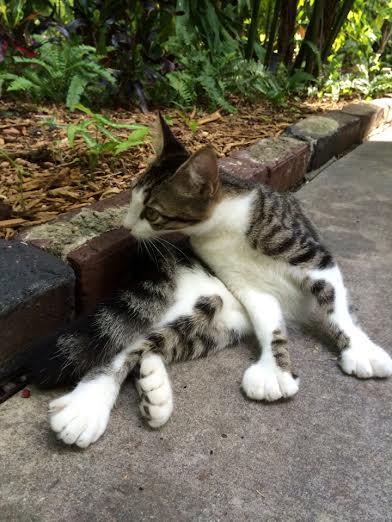 Терапевтическая помощь от животных