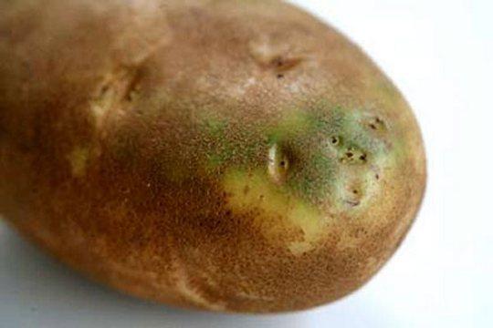 Цветки картофеля помогут от болезней