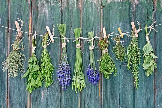 Правила заготовки лекарственных растений