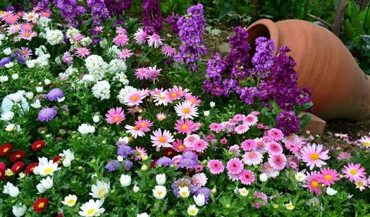 Технология создания цветника у дома