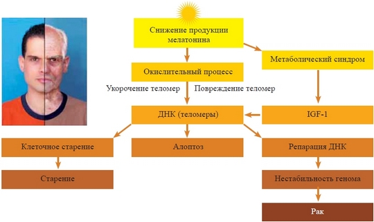 Как регулировать выработку мелатонина