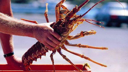 Вкусные морепродукты и их характеристика